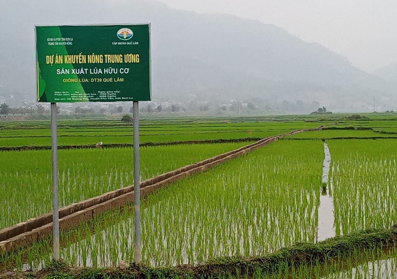 Phù Yên: Trồng lúa hữu cơ, lợi nhuận tăng hơn 8 triệu đồng so với lúa thông thường  - Ảnh 4.