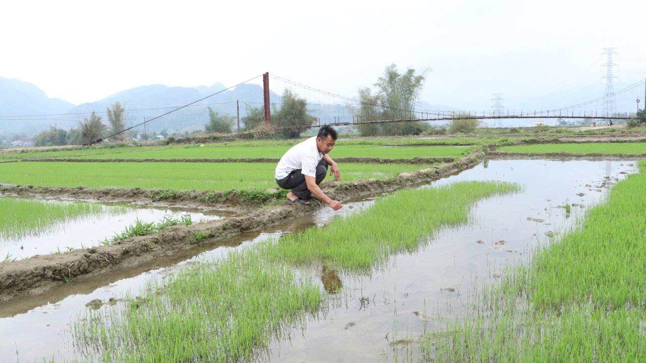 Phù Yên: Trồng lúa hữu cơ, lợi nhuận tăng hơn 8 triệu đồng so với lúa thông thường  - Ảnh 5.
