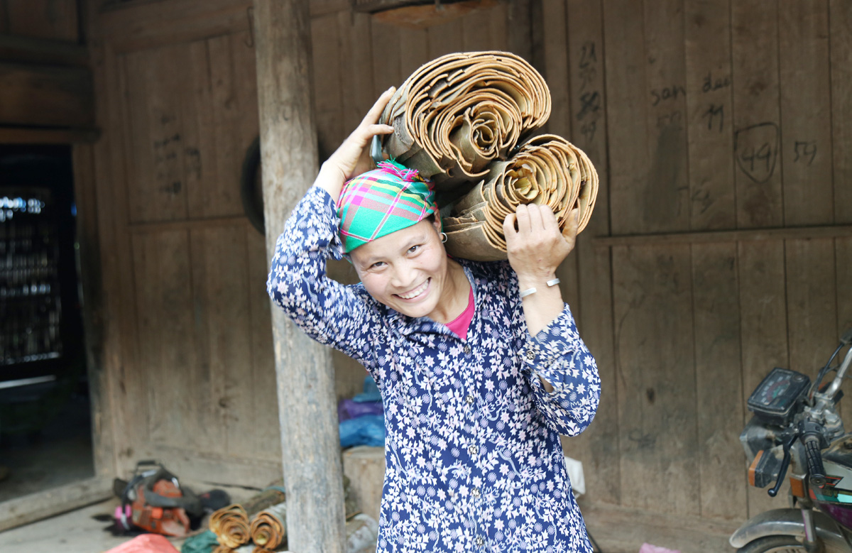 """Lào Cai: Lạ quá, nông dân xứ này trồng thứ cây gì bán cả vỏ lẫn lá, thành """"chủ nợ"""" ngân hàng? - Ảnh 1."""