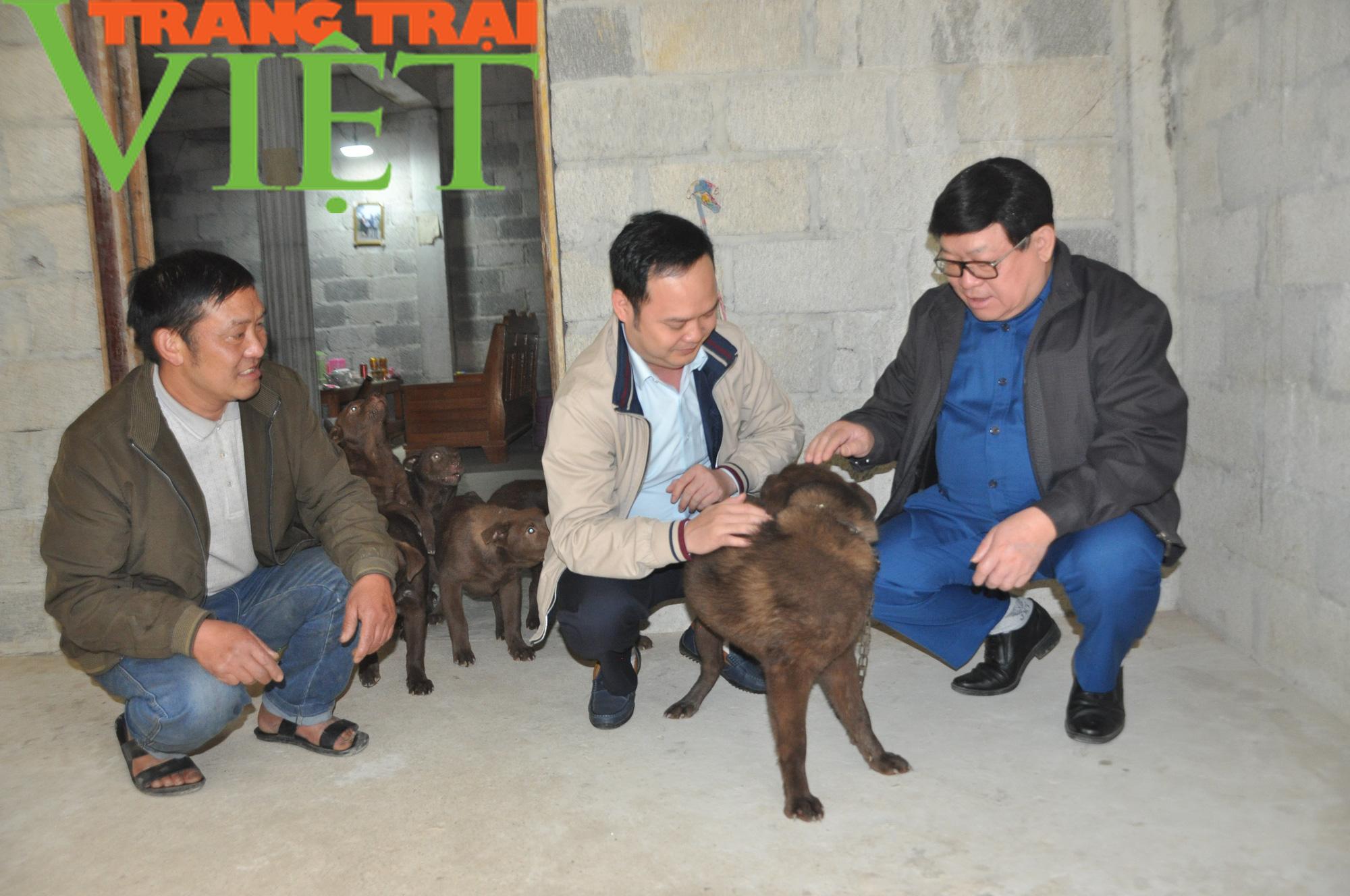 Chủ tịch Hội Nông dân Việt Nam gợi mở điều này giúp dân nuôi chó Mông Cộc ở Hà Giang làm giàu nhanh - Ảnh 4.
