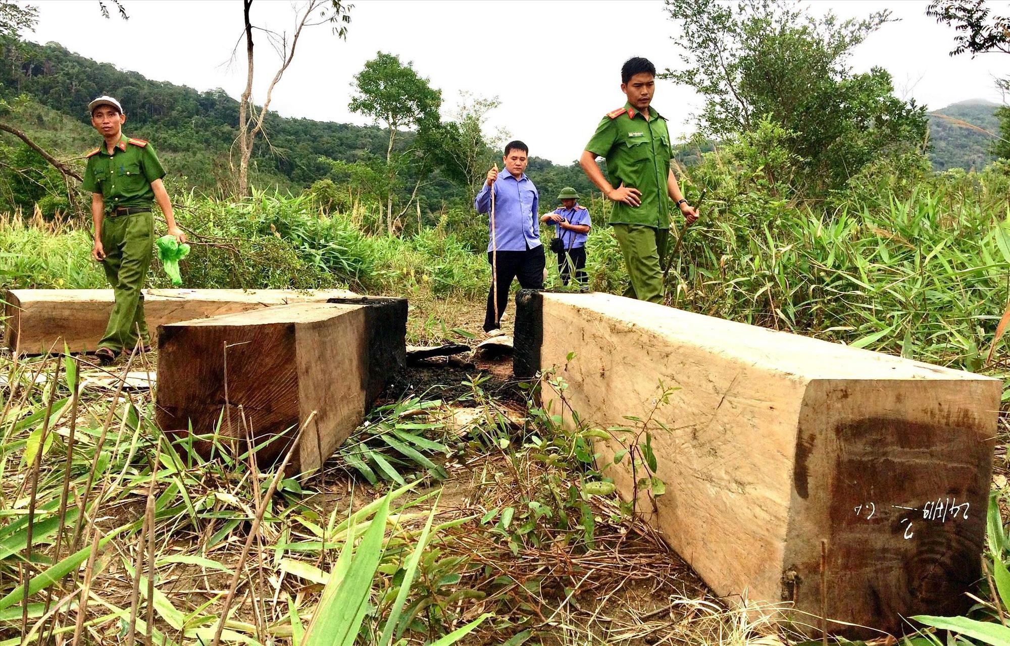 Công an tỉnh phải báo cáo tiến độ điều tra 6 Ban quản lý rừng - Ảnh 2.