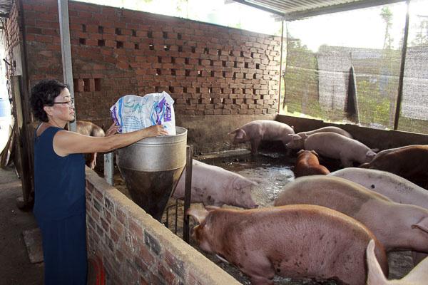 Một hộ chăn nuôi heo ở huyện Châu Đức, Bà Rịa Vũng Tàu. Ảnh Đông Hiếu