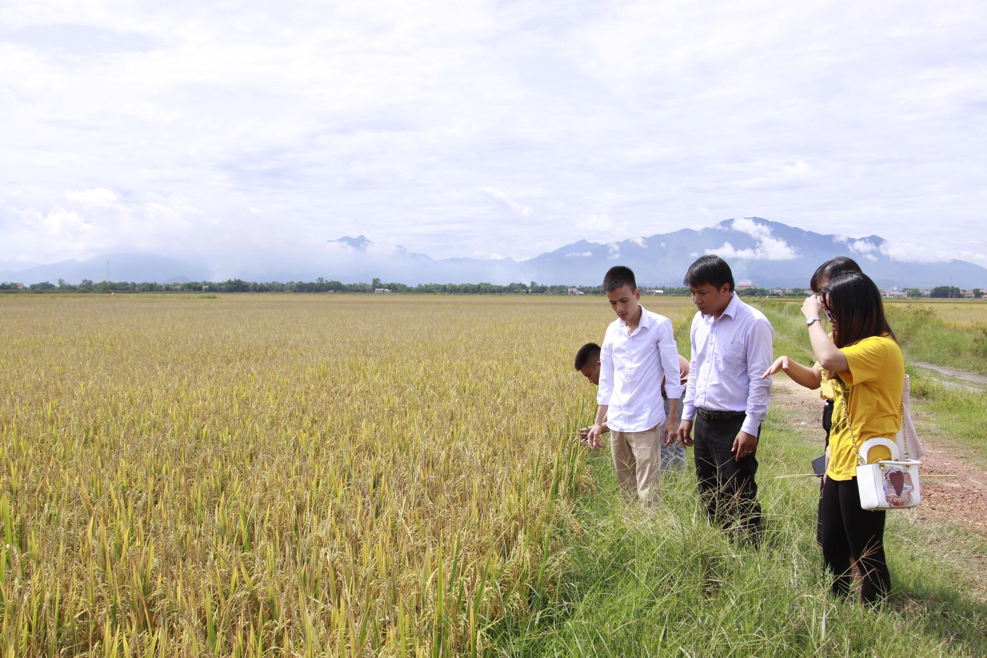 Giá lúa gạo hôm nay 24/3: Giá gạo xuất khẩu Việt Nam lại vượt Thái Lan, khách hàng tìm mua gạo Việt ngày càng nhiều - Ảnh 1.