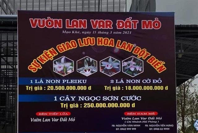"""Tiết lộ sốc về giao dịch lan đột biến """"siêu khủng"""" 250 tỷ đồng ở Quảng Ninh - Ảnh 1."""