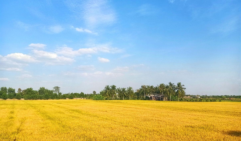 Long An: Những làng quê bỗng đẹp đến lạ kỳ qua những tấm hình chụp bằng điện thoại của lữ khách - Ảnh 3.