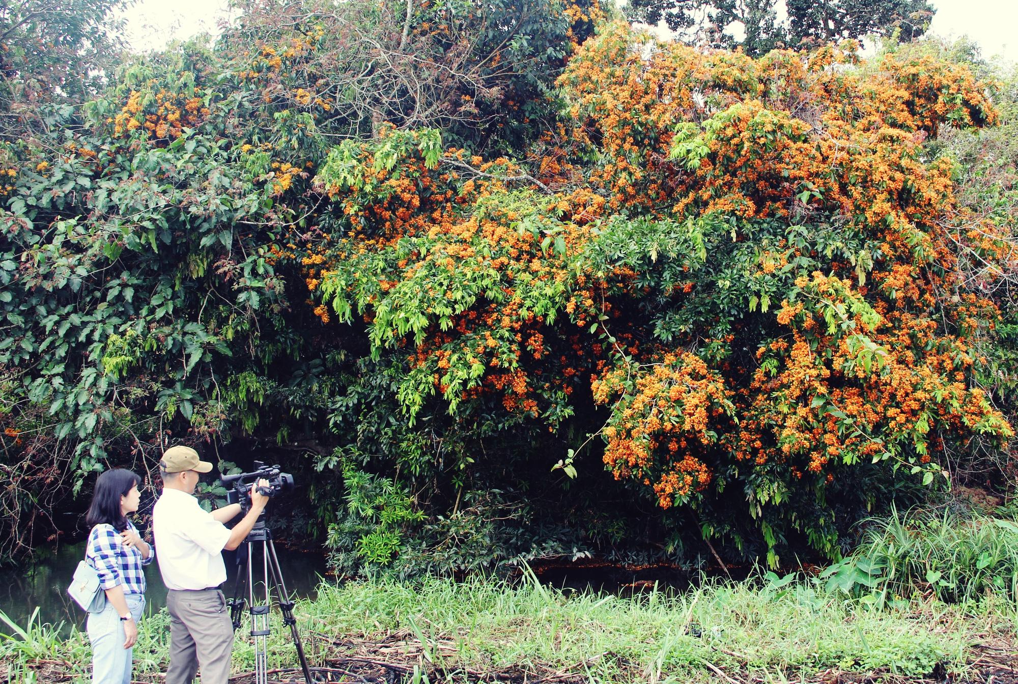Phú Yên: Đẹp mê mẩn hoa trang rừng cổ thụ bung nở rực rỡ - Ảnh 5.