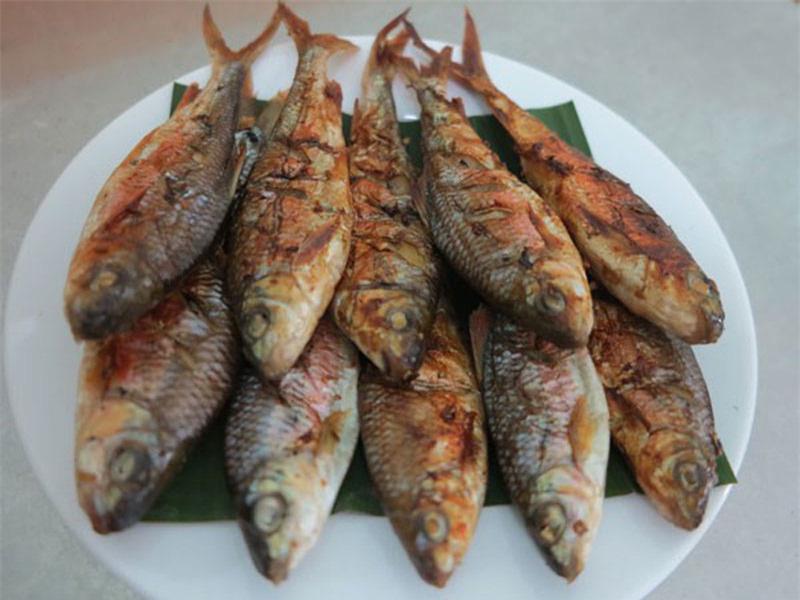 Nghệ An: Loài cá tên nghe đã thấy mát mẻ, chỉ thích sống trong khe, ăn lại lợi sữa ai cũng mê - Ảnh 2.