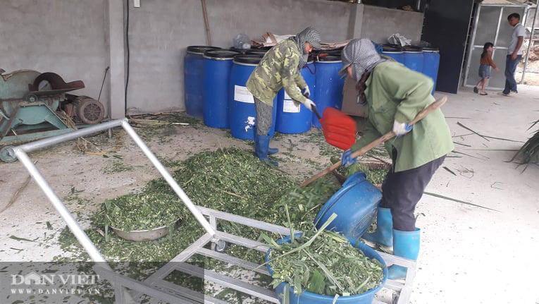 Thái Nguyên: Bỏ công tác đoàn về chăn nuôi đủ thứ, thanh niên trẻ kiếm đều tay mỗi tháng vài chục triệu đồng - Ảnh 3.