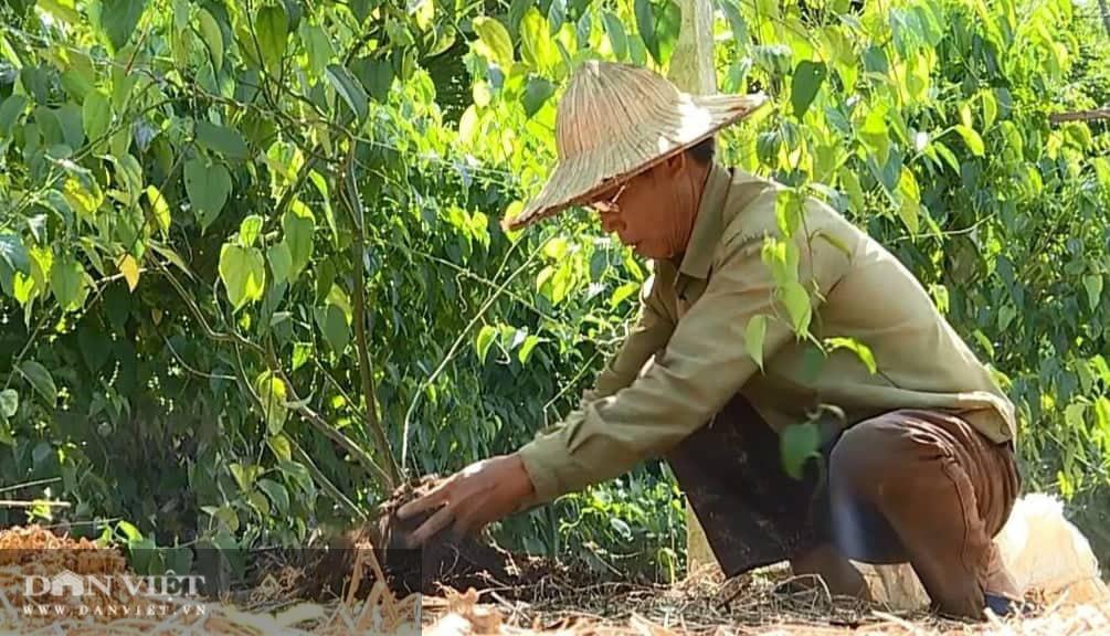 Phú Thọ: Đưa cây lạ có nguồn gốc từ Nam Mỹ về trồng, bất ngờ cho thu nhập không tưởng - Ảnh 1.