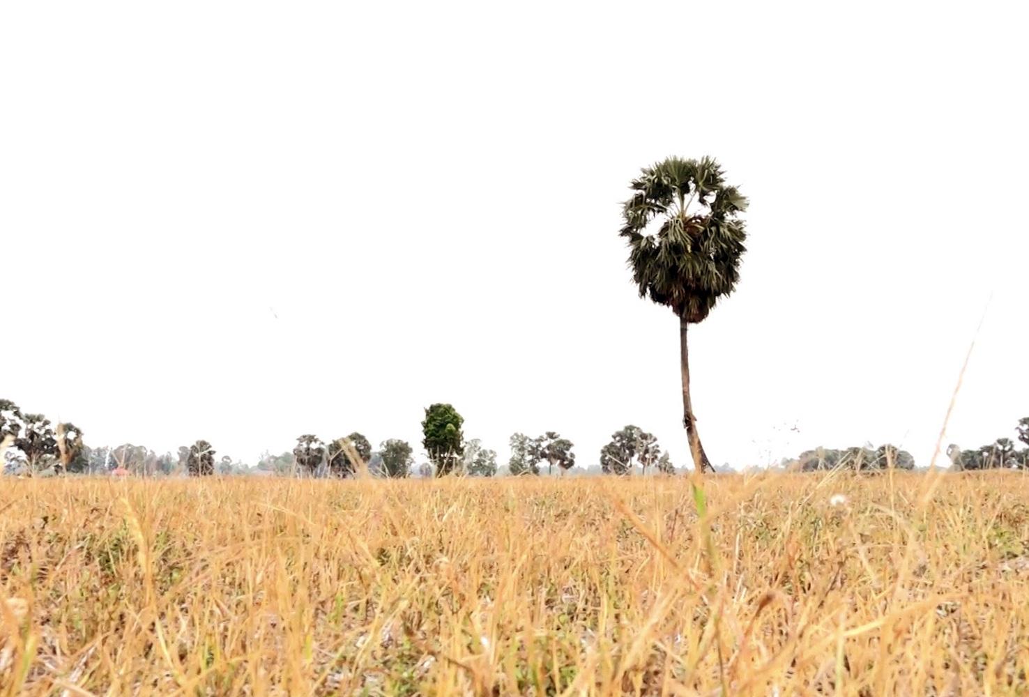 Chuyện lạ An Giang: Giếng nước tự nhiên giữa cánh đồng quanh năm cho nước ngọt - Ảnh 2.