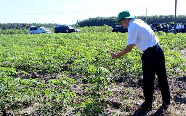 Ông Nguyễn Đình Xuân – Giám đốc Sở NNPTNT Tây Ninh kiểm tra vùng trồng sắn ở huyện Tân Châu