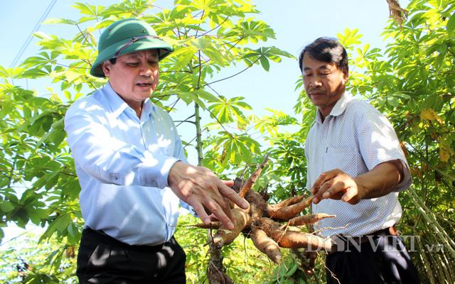 Thứ Trưởng Bộ NNPTNT Lê Quốc Doanh (trái) kiểm tra giống sắn kháng bệnh tại Tây Ninh cuối năm 2020