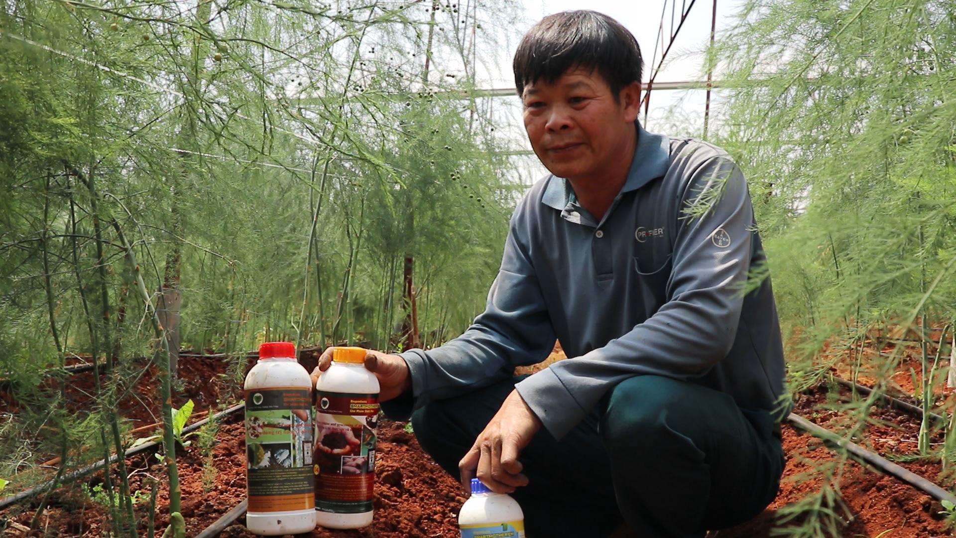 Trồng măng tây xanh, lão nông này có lợi nhuận gấp 4-5 lần cà phê - Ảnh 4.