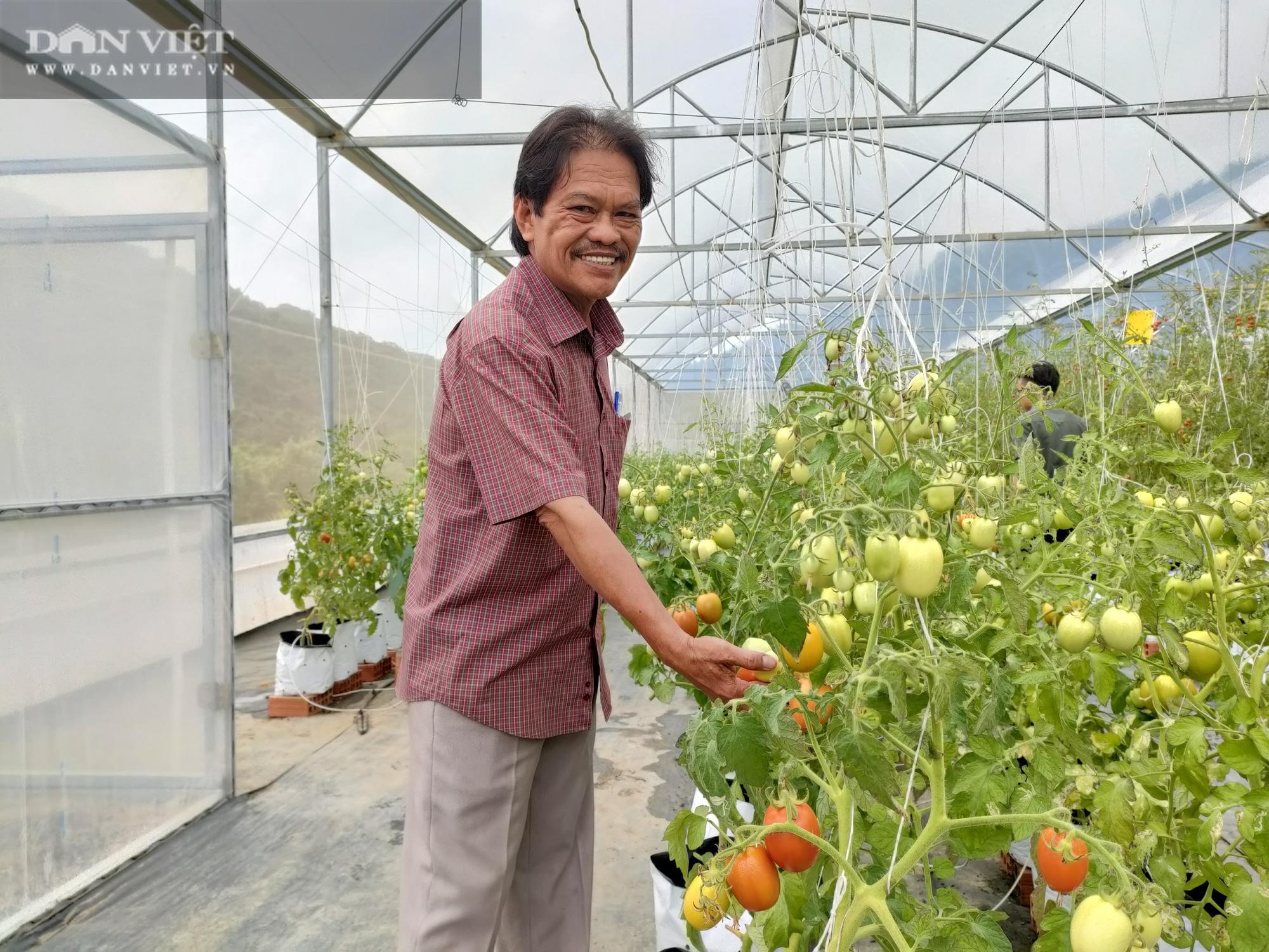 """Ngắm vườn cà chua chuỗi ngọc mọc """"chi chít"""" quả trên đồi - Ảnh 13."""