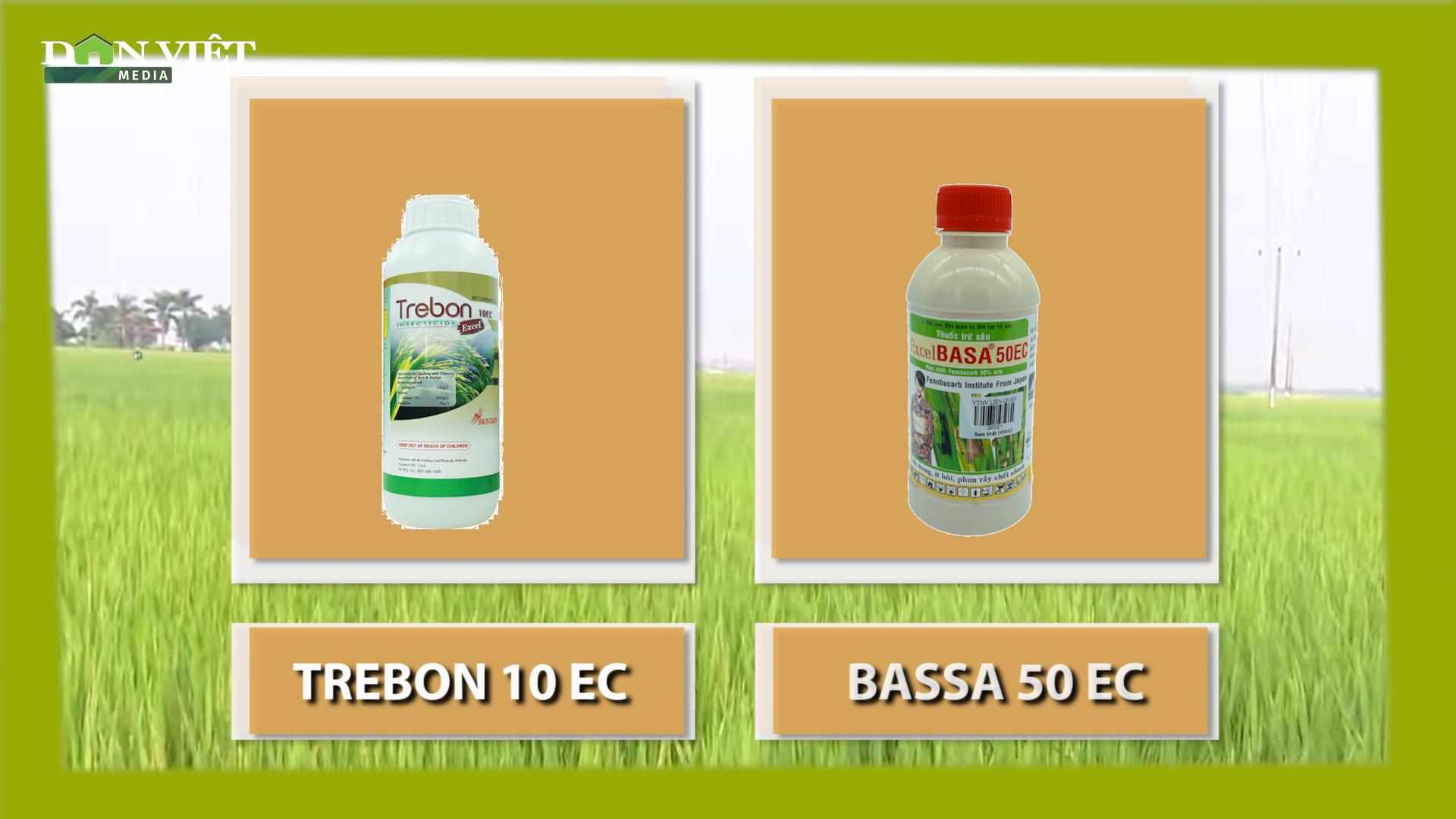 Hé lộ phương pháp tiêu diệt bọ xít hôi hại lúa hiệu quả  - Ảnh 3.