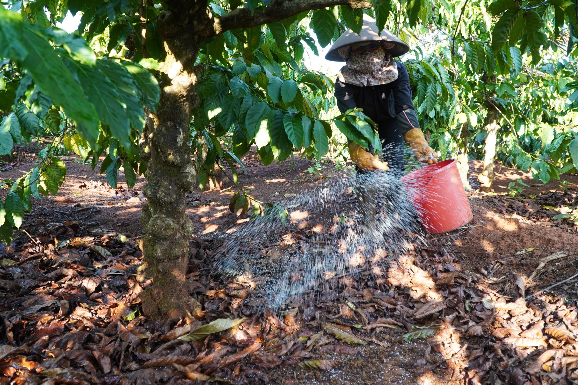 Nông dân Gia Lai hối hả đưa máy móc tưới cho cà phê sai quả - Ảnh 10.