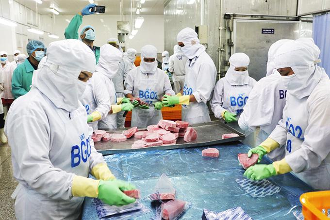 Khánh Hòa: Đơn hàng mua cá ngừ đại dương về nhiều hơn, nhưng doanh nghiệp lại lo thiếu cái gì? - Ảnh 1.