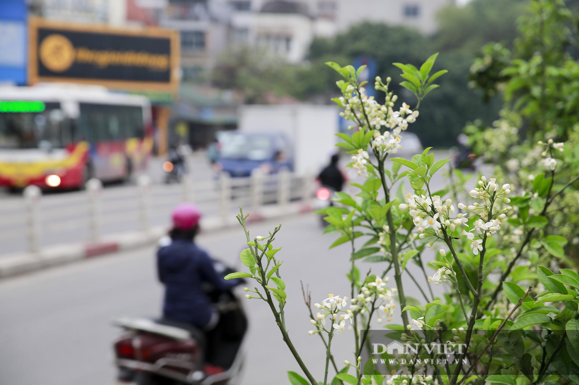Kỳ lạ thú chơi cây hoa mới của người Hà Nội - Ảnh 10.