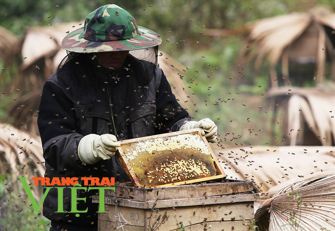 """Điện Biên: Thuần dưỡng """"lộc rừng"""" nông dân Chà Nưa thu tiền tỷ mỗi năm - Ảnh 1."""