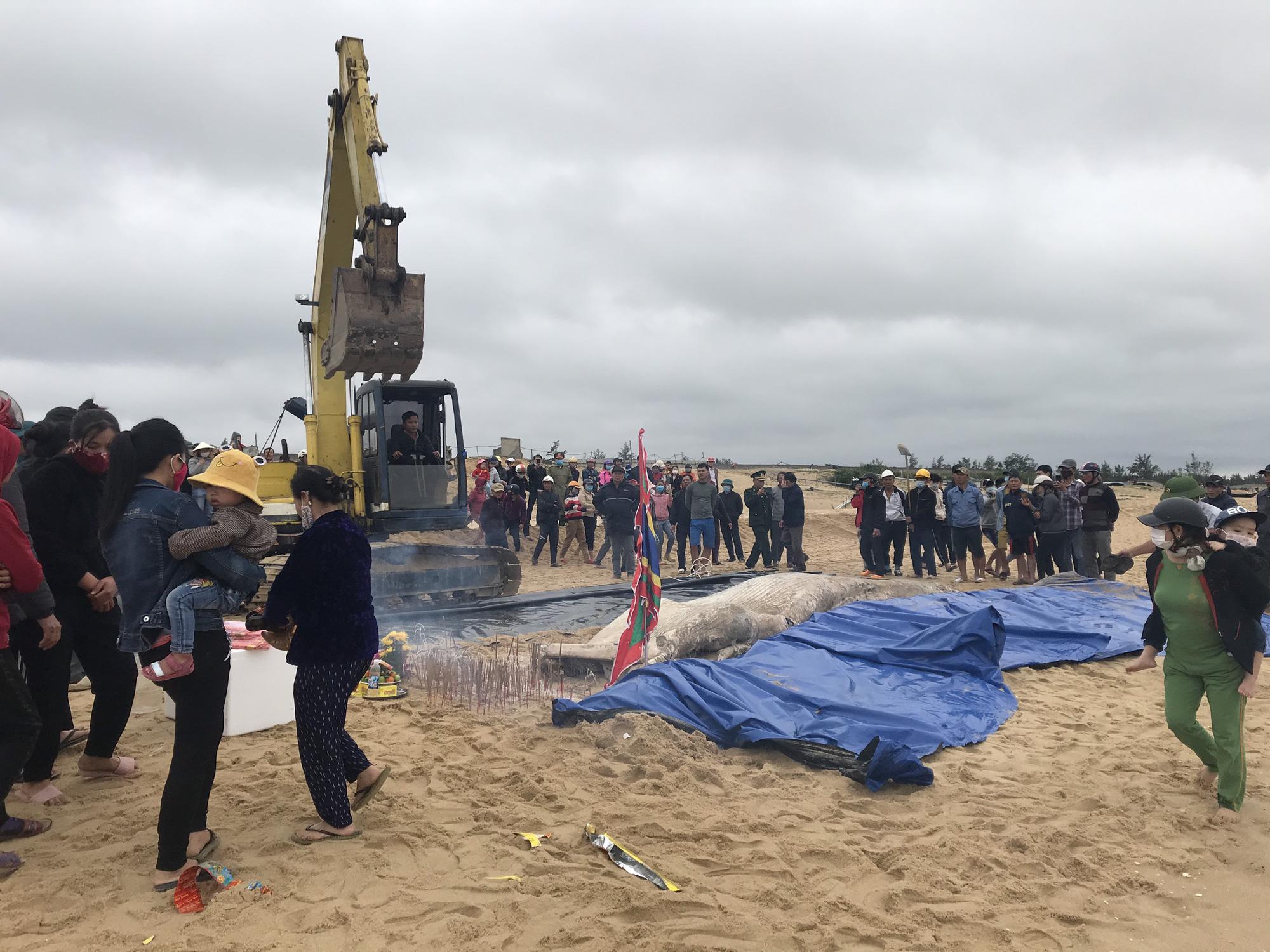 Phát hiện xác cá voi nặng một tấn dạt vào bờ biển Quảng Bình - Ảnh 3.