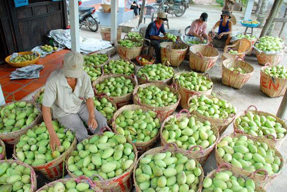 Trung Quốc tăng mua, trái cây Việt Nam lên giá nông dân phấn khởi - Ảnh 1.