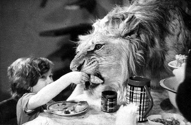 Câu chuyện vừa cảm động vừa đáng sợ về gia đình duy nhất trên thế giới nuôi sư tử như thú cưng trong nhà - Ảnh 1.