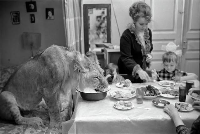 Câu chuyện vừa cảm động vừa đáng sợ về gia đình duy nhất trên thế giới nuôi sư tử như thú cưng trong nhà - Ảnh 4.