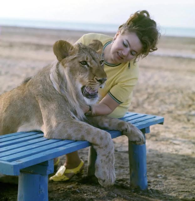 Câu chuyện vừa cảm động vừa đáng sợ về gia đình duy nhất trên thế giới nuôi sư tử như thú cưng trong nhà - Ảnh 9.