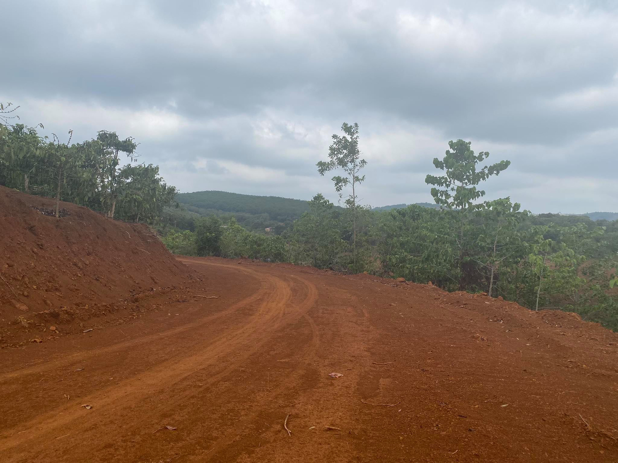 Đắk Nông: Ngang nhiên mở đường, hủy hoại rừng phòng hộ bán ngập ngay Thành phố Gia Nghĩa - Ảnh 2.