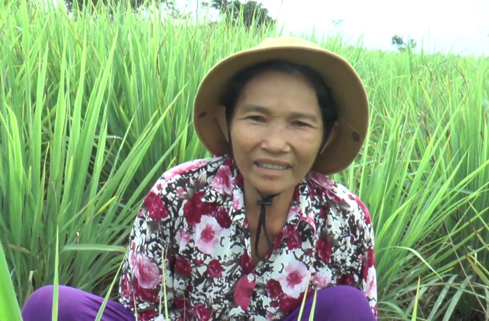 """Tiền Giang: Nhờ trồng cây gia vị này, nông dân huyện đảo nghèo nhất """"thủ phủ trái cây"""" sống phây phây - Ảnh 2."""