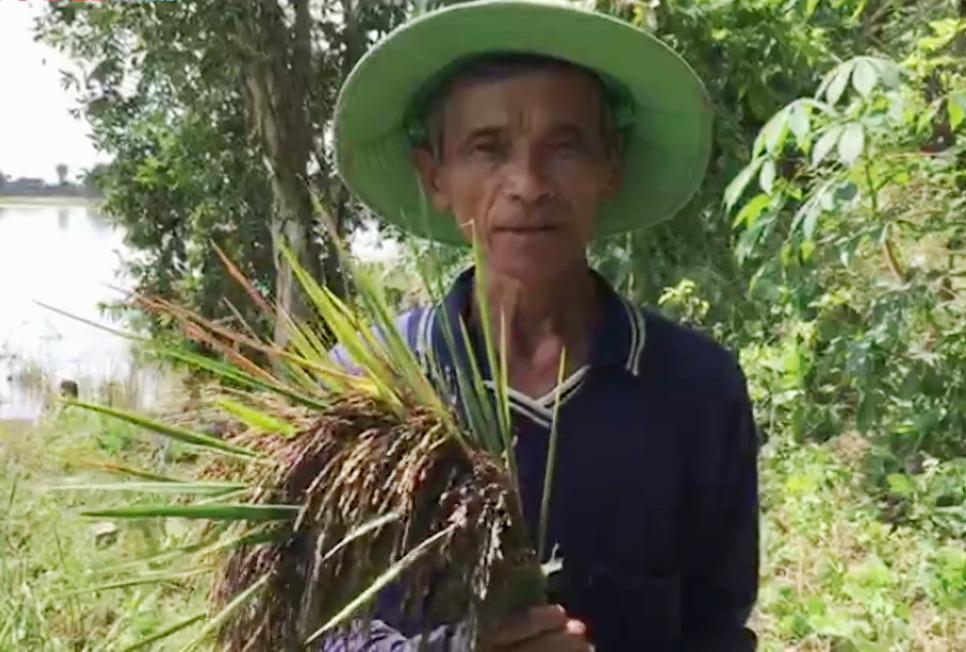 """Long An: Ông nông dân đưa loại lúa tím lịm này về """"rốn phèn"""", nông dân cầm chắc lợi nhuận hàng chục triệu mỗi ha - Ảnh 3."""