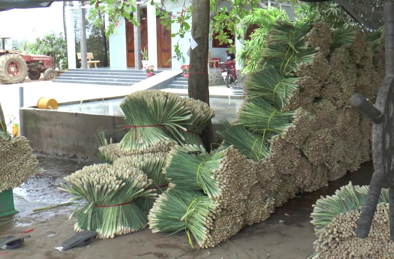 """Tiền Giang: Nhờ trồng cây gia vị này, nông dân huyện đảo nghèo nhất """"thủ phủ trái cây"""" sống phây phây - Ảnh 3."""