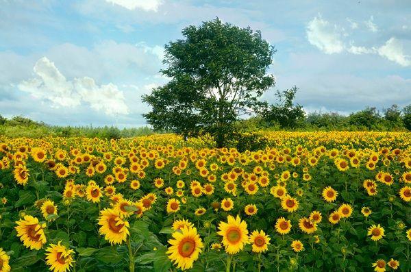 Thủ tục chuyển đổi mục đích sử dụng đất nông nghiệp sang đất phi nông nghiệp mới - Ảnh 1.
