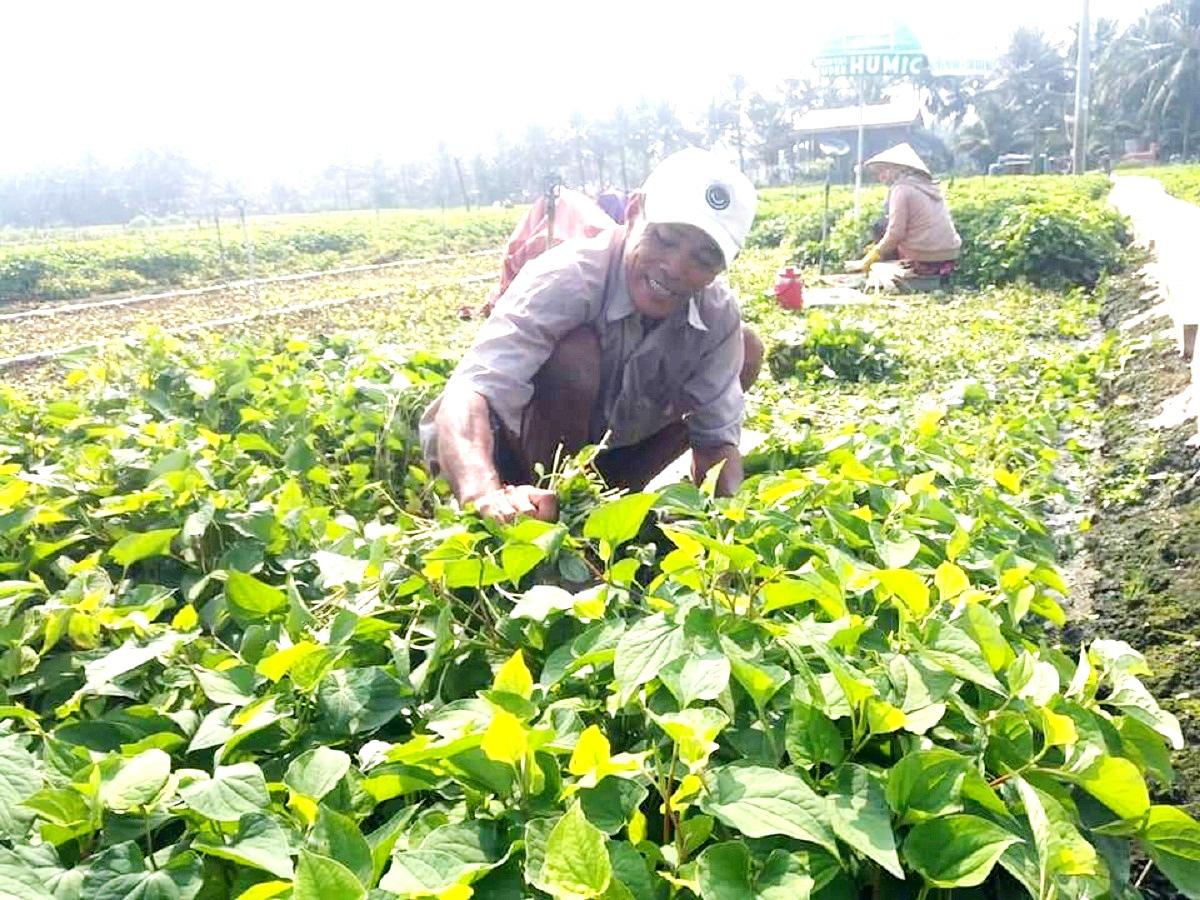 """Nông dân trồng """"rau làm giàu"""", địa phương cấp tập bơm trữ nước ngọt phòng hạn mặn - Ảnh 3."""
