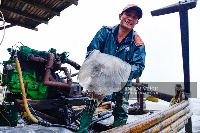 Ra khơi bắt con nhơn nhớt lại nhiều chân, ngư dân Thanh Hóa có tiền triệu - Ảnh 1.