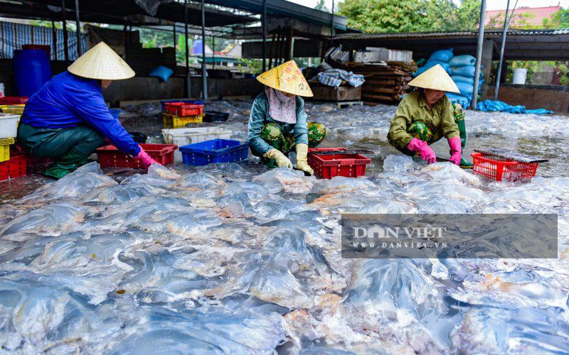 Ra khơi bắt con nhơn nhớt lại nhiều chân, ngư dân Thanh Hóa có tiền triệu - Ảnh 7.