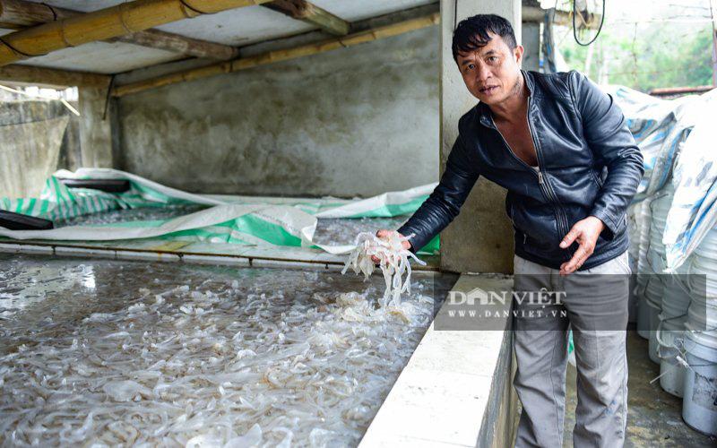 Ra khơi bắt con nhơn nhớt lại nhiều chân, ngư dân Thanh Hóa có tiền triệu - Ảnh 6.