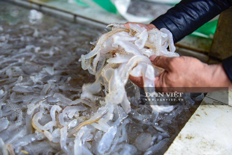 Ra khơi bắt con nhơn nhớt lại nhiều chân, ngư dân Thanh Hóa có tiền triệu - Ảnh 5.