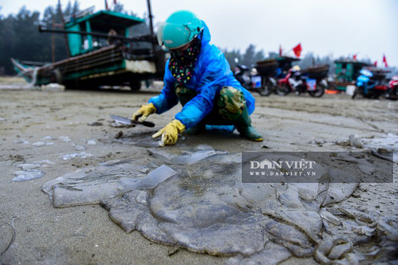 Ra khơi bắt con nhơn nhớt lại nhiều chân, ngư dân Thanh Hóa có tiền triệu - Ảnh 9.