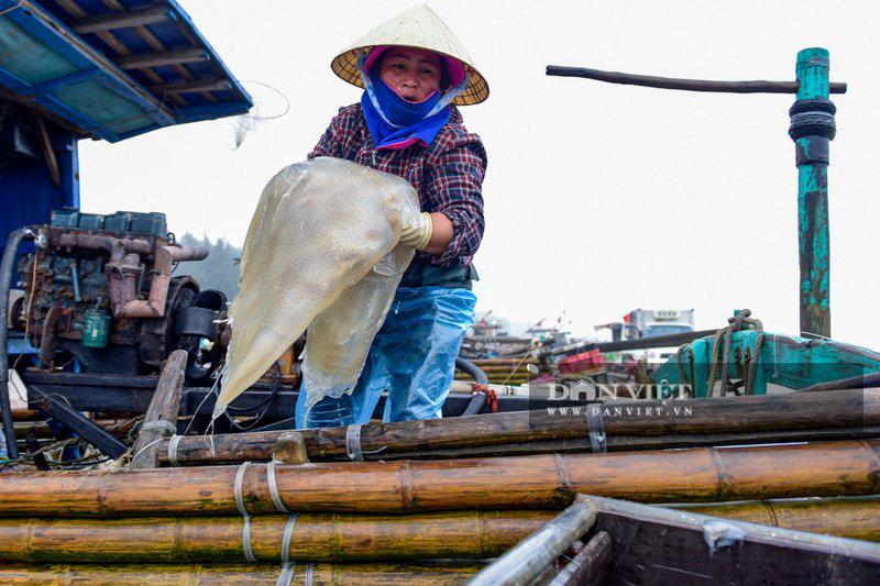 Ra khơi bắt con nhơn nhớt lại nhiều chân, ngư dân Thanh Hóa có tiền triệu - Ảnh 2.