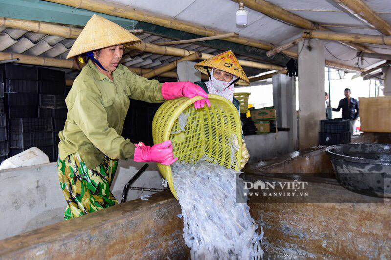 Ra khơi bắt con nhơn nhớt lại nhiều chân, ngư dân Thanh Hóa có tiền triệu - Ảnh 10.