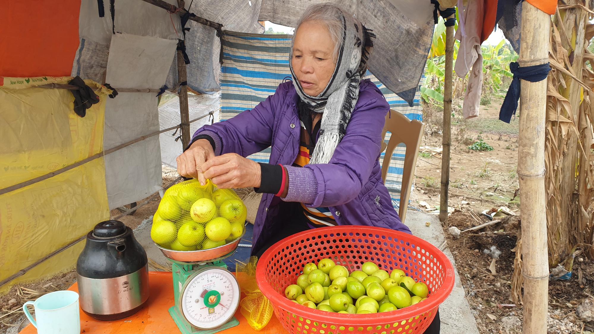 Thái Bình: Rủ nhau trồng táo làm giàu, cả xóm ở đây ăn nên làm ra - Ảnh 3.