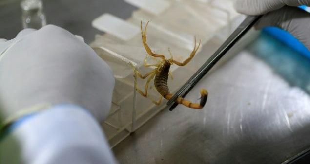 'Vua bọ cạp' bỏ việc tới sa mạc sống, kiếm 173 triệu đồng mỗi gram nọc độc bọ cạp - Ảnh 2.