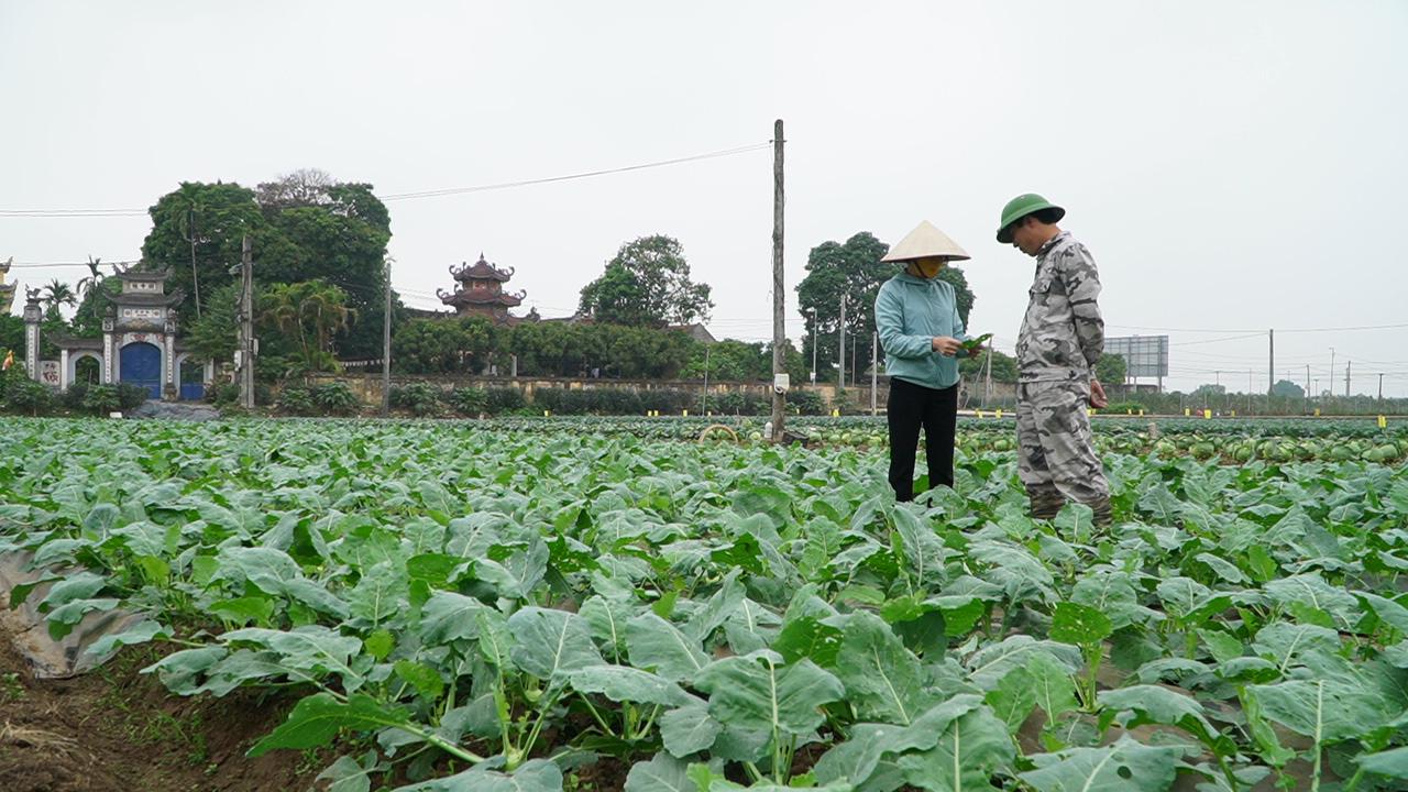 Hà Nội: Nông dân có thực sự cần giải cứu nông sản? - Ảnh 2.