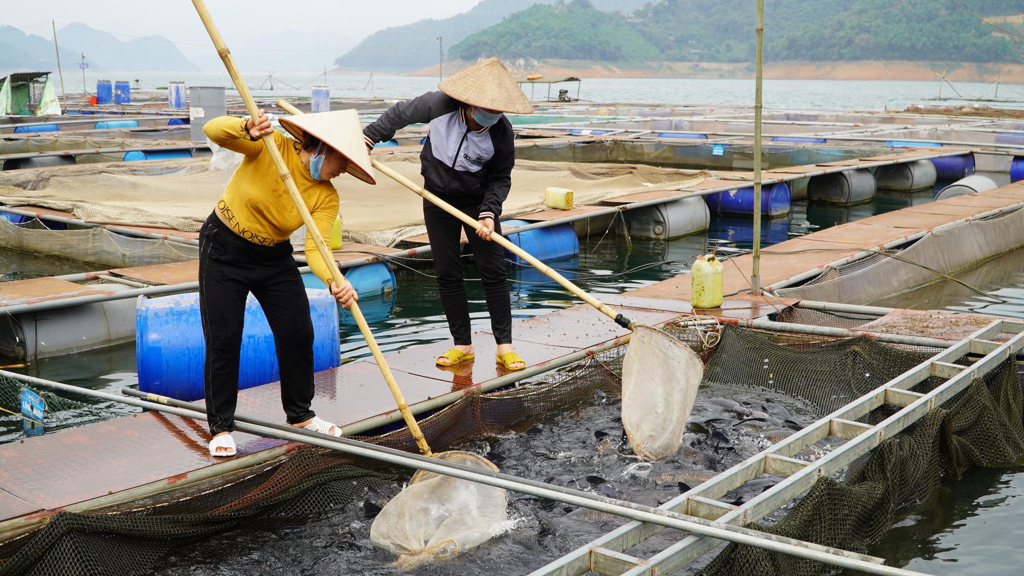 Sử dụng đến 9 tỷ mét khối nước nuôi cá, nông dân Hòa Bình trúng lớn - Ảnh 4.