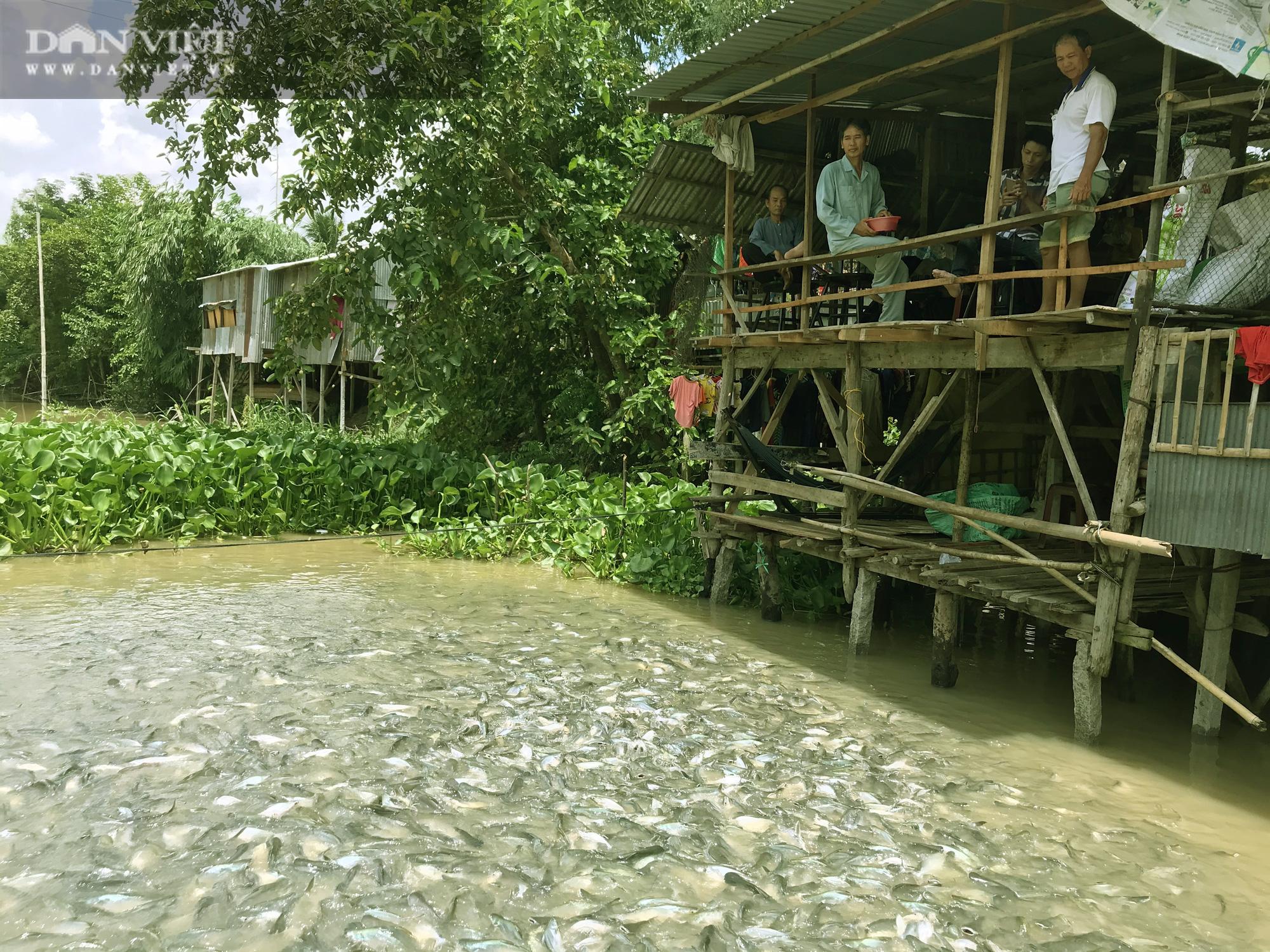 Lạ đời những người bỏ tiền túi nuôi cá sông như thú cưng - Ảnh 2.