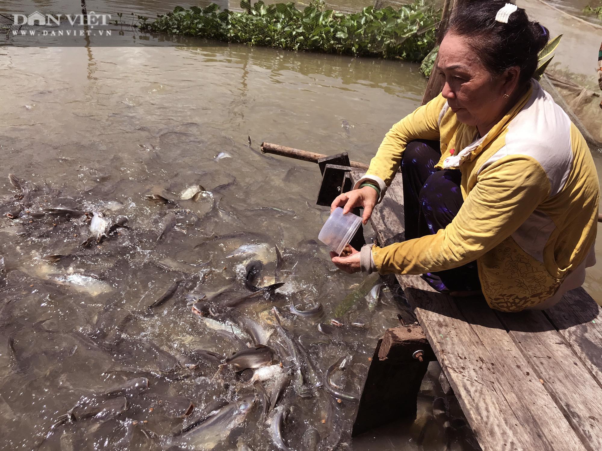 Lạ đời những người bỏ tiền túi nuôi cá sông như thú cưng - Ảnh 3.