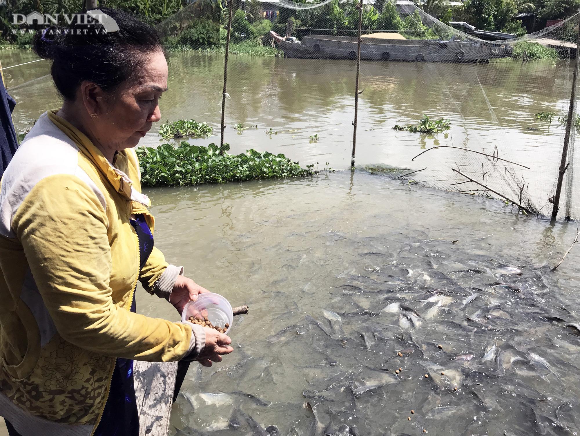 Lạ đời những người bỏ tiền túi nuôi cá sông như thú cưng - Ảnh 6.