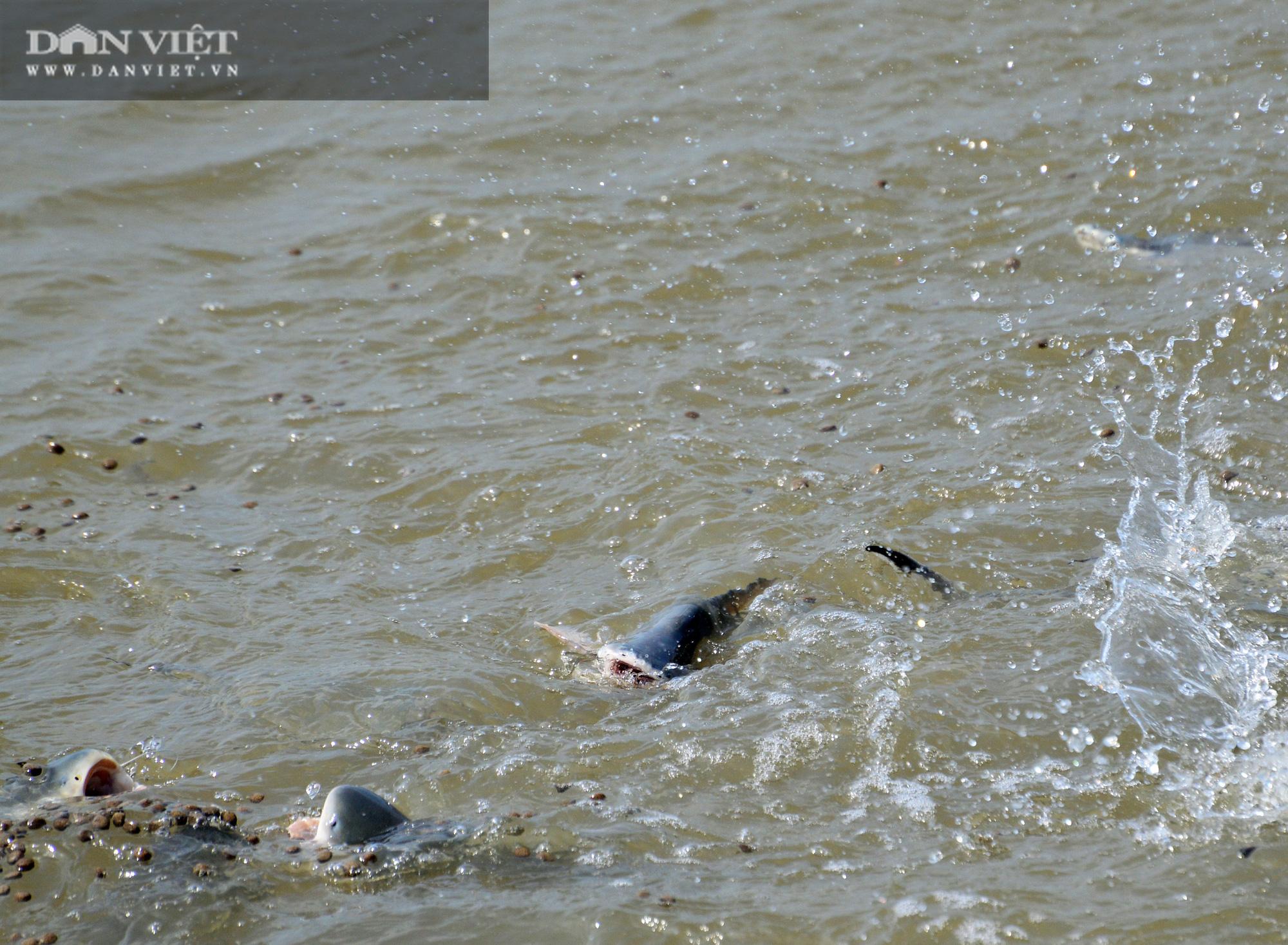 Lạ đời những người bỏ tiền túi nuôi cá sông như thú cưng - Ảnh 8.