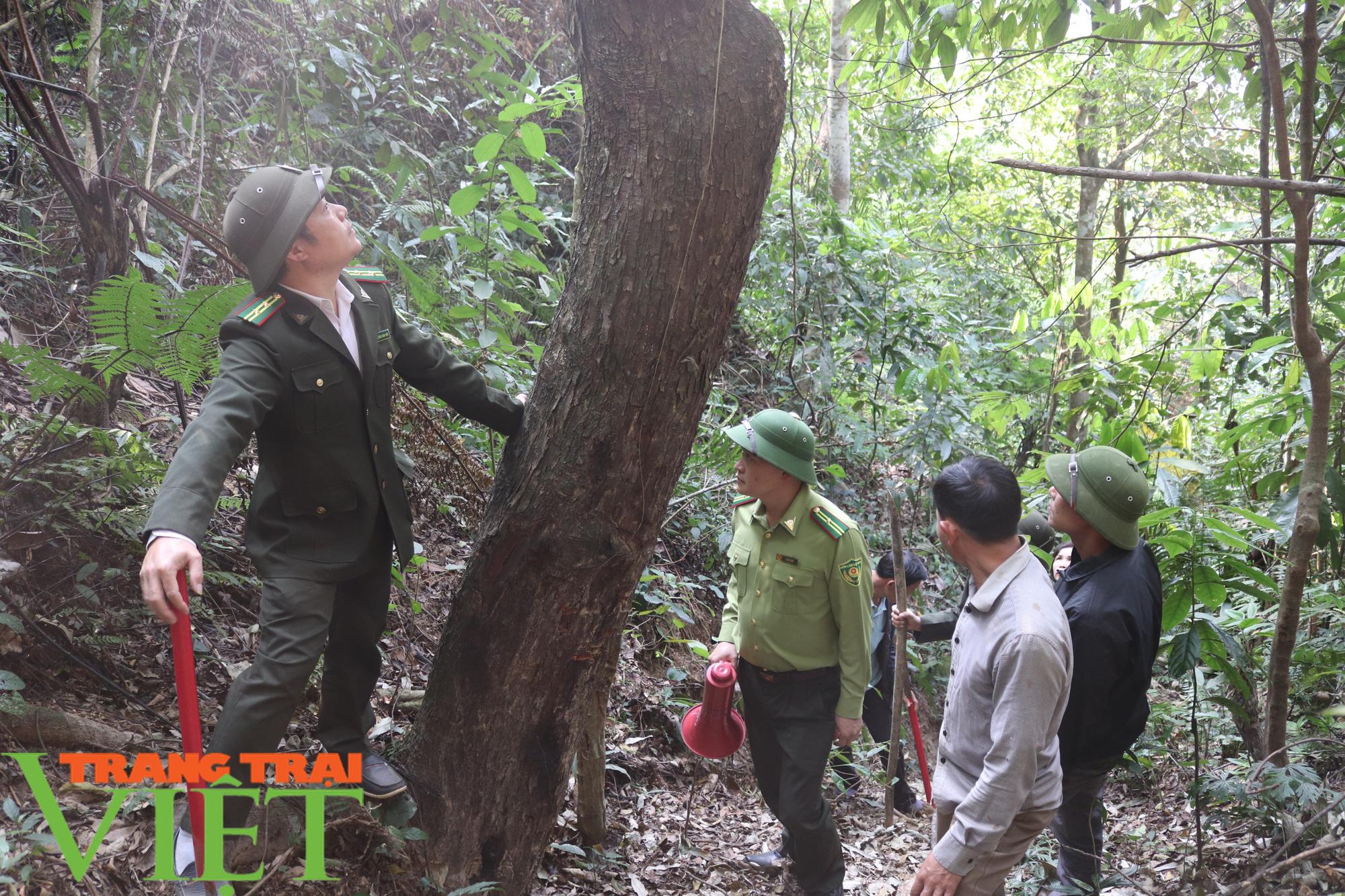 Ban Quản lý rừng đặc dụng – phòng hộ Thuận Châu: Chủ động PCCCR mùa hanh khô - Ảnh 2.